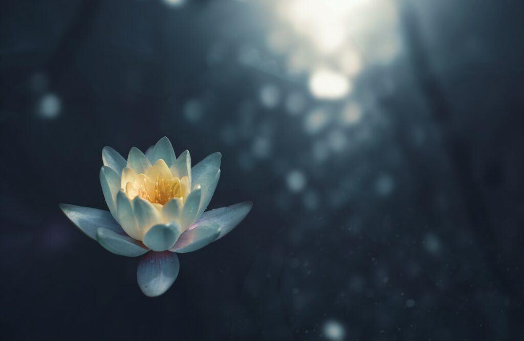 lotus-yoga-focus