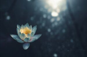 lotus-yoga-focus